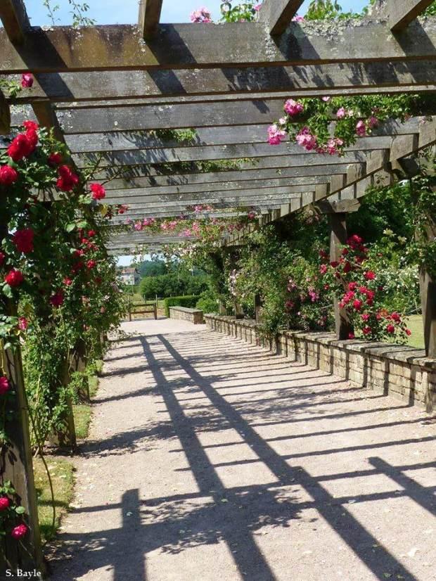 Limoges parc roseraie 6